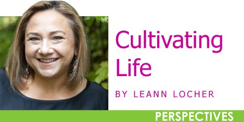 Cultivating Life: You say salvia, I say sage — one big happy family